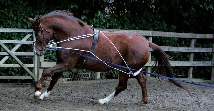 Wypinacz - system treningowy Pessoa