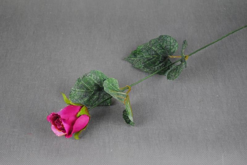 Róża z rosą
